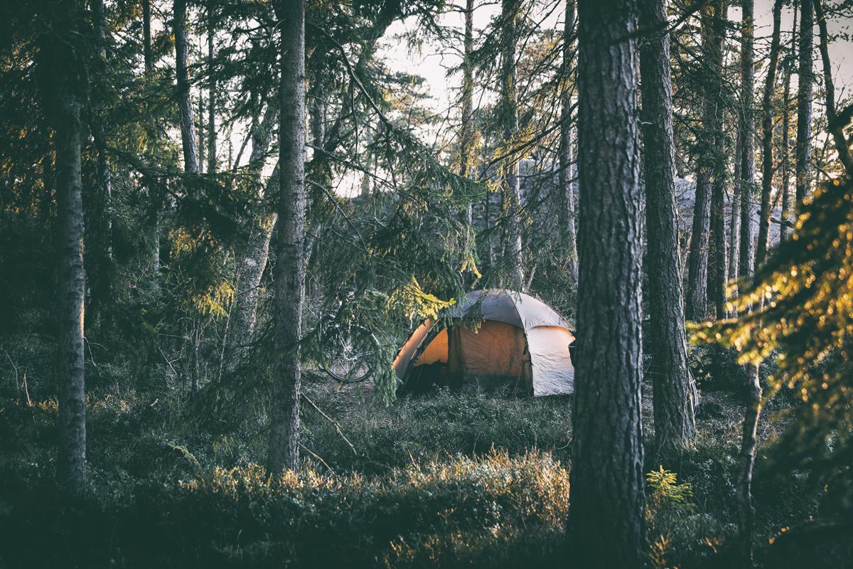 Porkkala, Porkkalanniemi, Kirkkonummi, Visit Finland, Our Finland, Uusimaa, travel, luonto, matkailu, matkustus, kotimaan matkailu, kotimaa, Suomi, Finland, nature, naturelover, luontopolku, valokuvaus, valokuvaaminen, valokuvaaja, Frida Steiner, Visualaddict, visualaddictfrida, luontovalokuva, naturephotography,  manty, puut, pine, forest, camping, woods, metsä