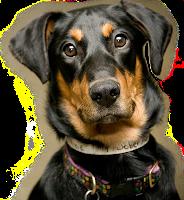 Cachorro preto png