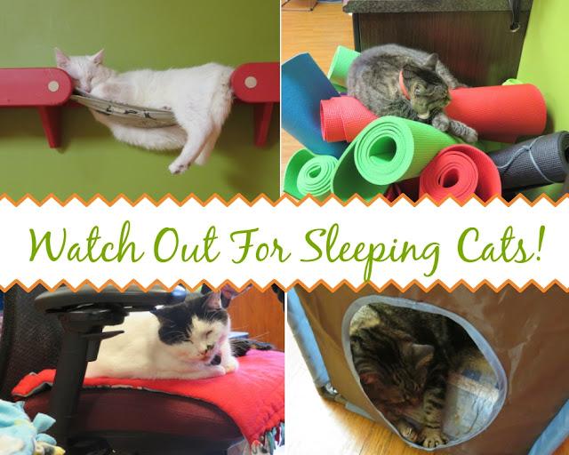 tiny lions lounge|cat cafes