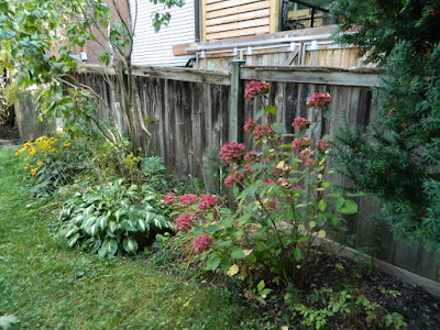 Riverdale backyard fall cleanup before by Paul Jung Gardening Services Toronto