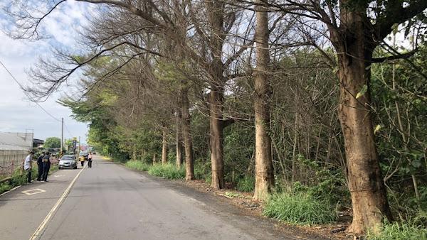 北斗鎮東螺溪岸行道樹影響農作物生長 老農狠鋸遭法辦