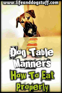 Dog Table Manners - Fluffy's Tips on How to Eat Properly.