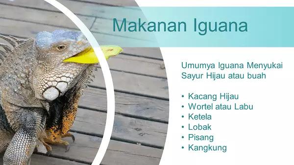 Pengertian Iguana, Ciri, Habitat, Dan Info Lengkap Lainnya