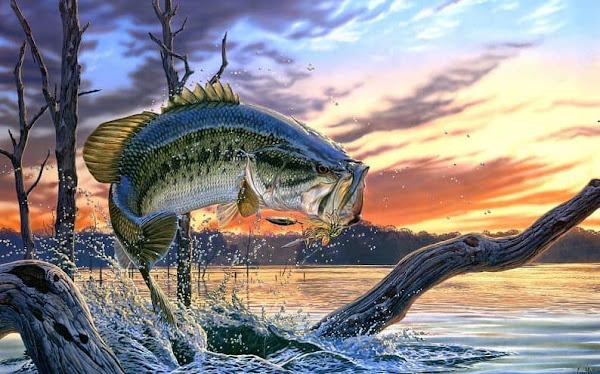 Hướng dẫn chọn điểm câu, mồi câu và kỹ thuật câu cá bass hiệu quả nhất
