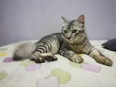 makanan kucing terbaik,vitamin untuk kucing