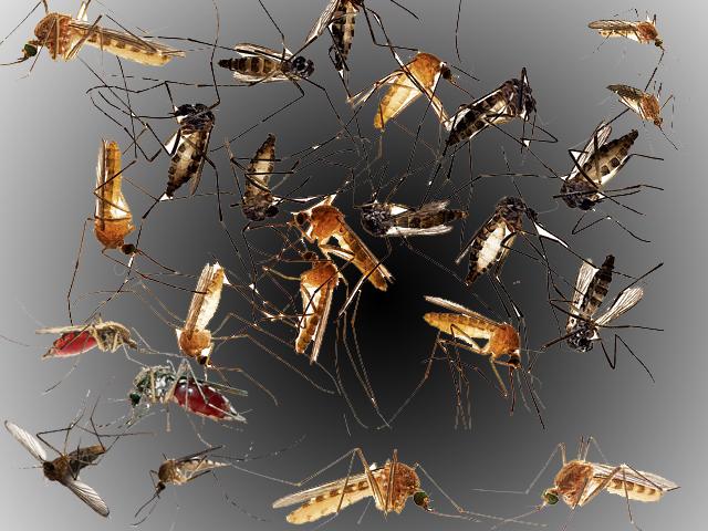 Mosquito Control in Bangalore