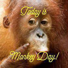 Monkey Day Wishes pics free download