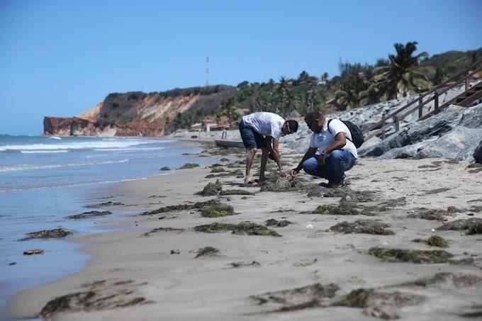 Manchas de óleo voltam a aparecer no litoral cearense após dois meses