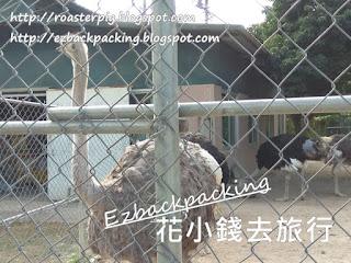 香港駝鳥園