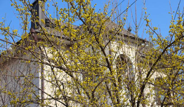 Весна в Дубоссарах
