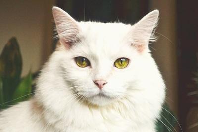 اسعار القطط في الامارات والكويت