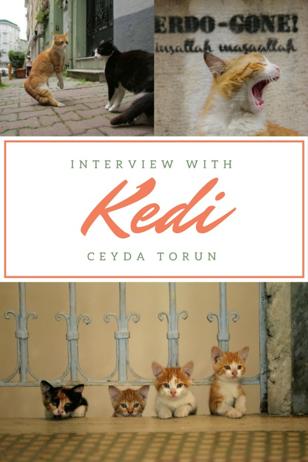 kedi movie