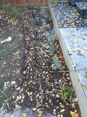 Dufferin Grove Toronto Garden Makeover After by Paul Jung Gardening Services--a Toronto Gardening Services Company