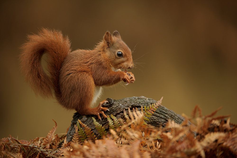 Cat In Fall Wallpaper White Red Squirrel