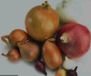 Image result for bawang - bawangan