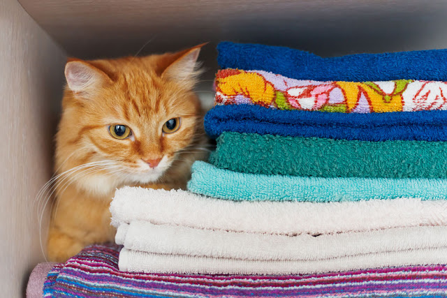 The best hiding places for your cat... like the linen closet, pictured