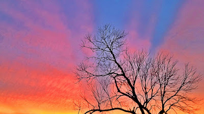 Dead Tree Sunset