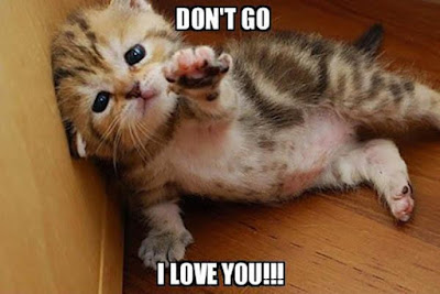 Best funny memes about love with cat image 2020.