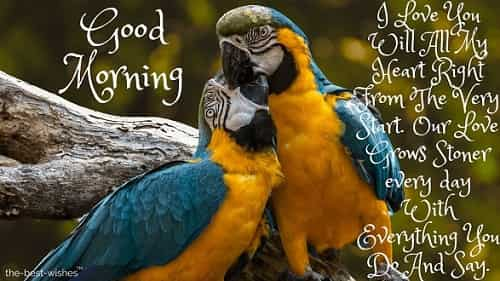 good morning love kiss images with love birds