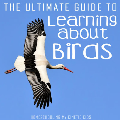 Mega round-up of backyard bird learning ideas for kids and homeschoolers.