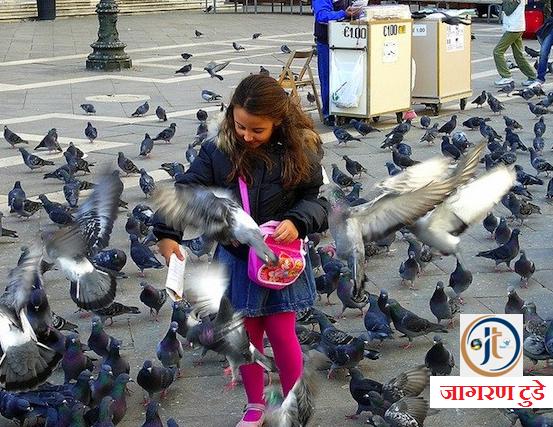 Pigeon Brings Lakshmi Money at Home