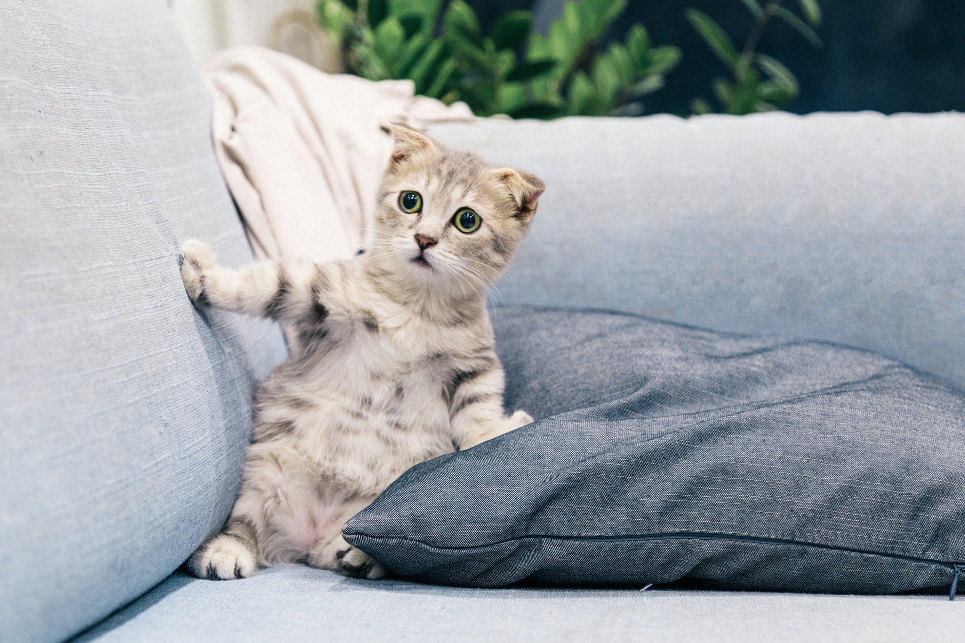 Empêcher les chats de rayer les meubles