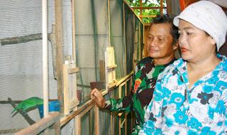 Yusran, Sebagai Penyelaman Cucak Hijau dan Meraup Untung Banyak Dari Menangkarkan Burung Cucak Hijau
