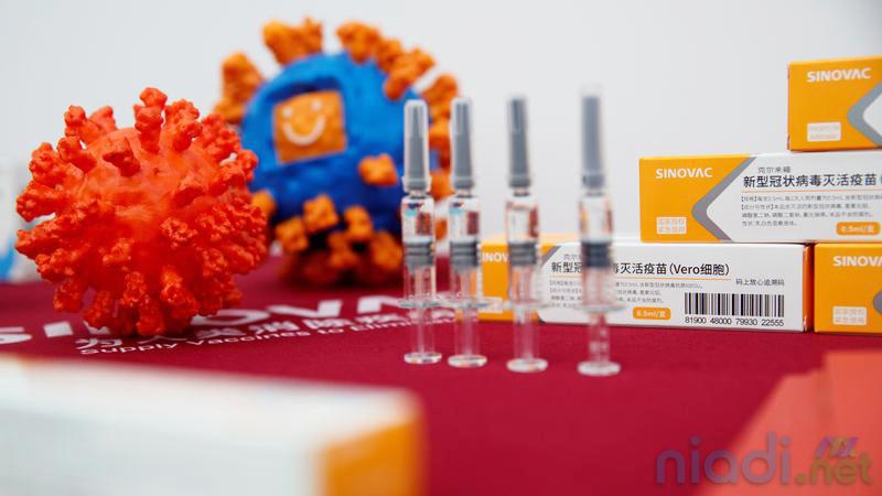 fakta-fakta soal vaksinasi covid-19 sinovac di indonesia
