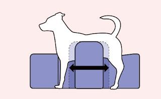 posicionamento de pé em cães