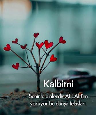 amin, dua, dünya telaşı, meşgale, kalp, aşk, sevgi, sevgi ağacı, ağaç, gökyüzü, manzara
