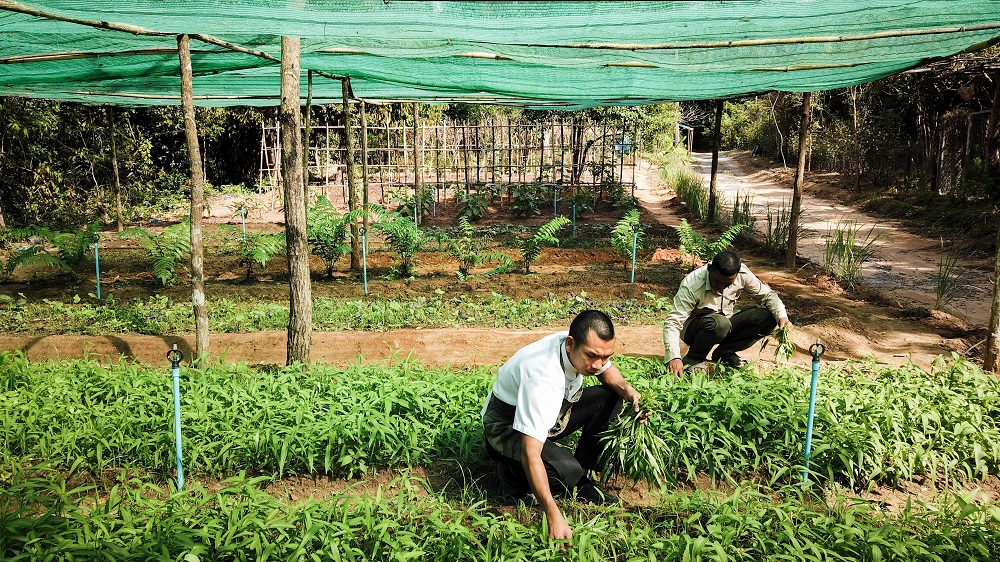 SHINTA MANI FOUNDATION EXPANDS SUSTAINABLE ORGANIC FARMING TO SUPPORT HOTELS AND LOCAL VILLAGERS
