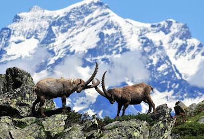 Alpesi gyöngyszem - Gran Paradiso Nemzeti Park