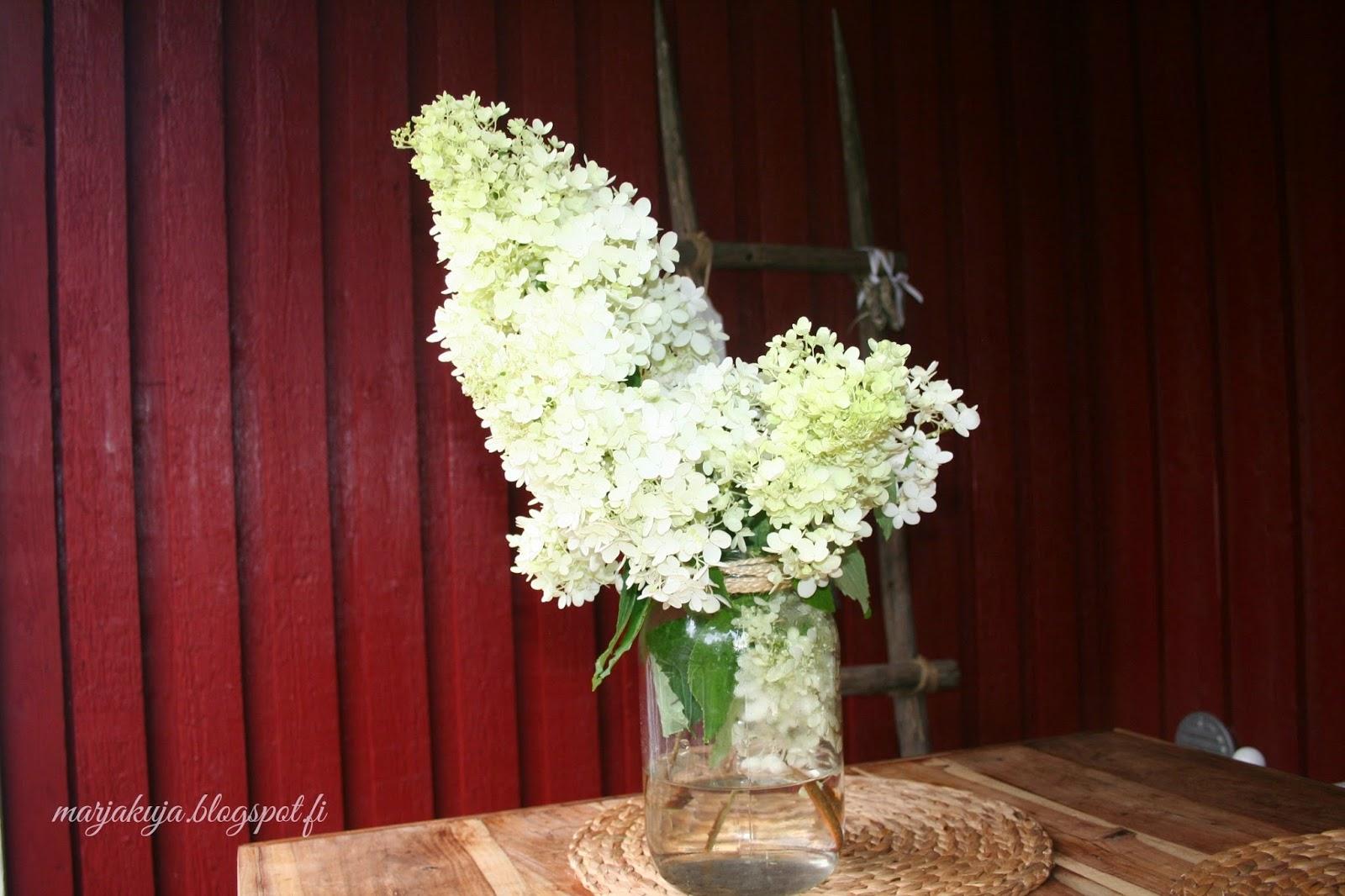 hortensian oksa lasimaljakossa terassilla