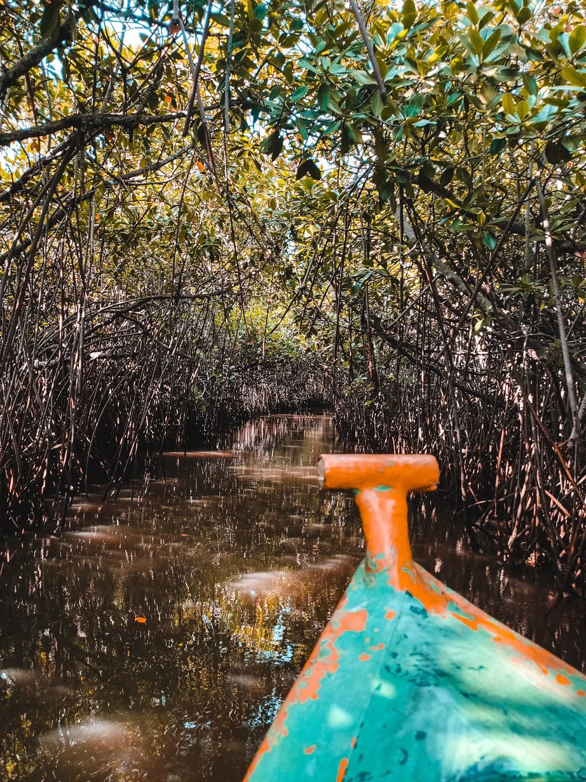 boat ride in pichavaram mangrove forest.