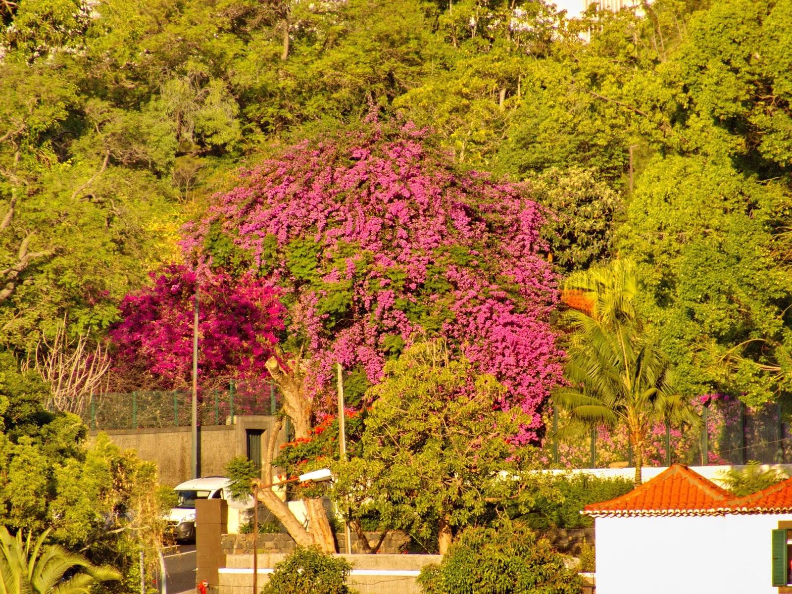 flores entre as árvores