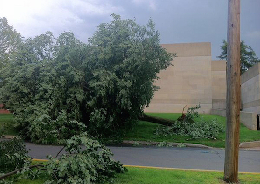 Uprooted tree, Wesleyan CFA