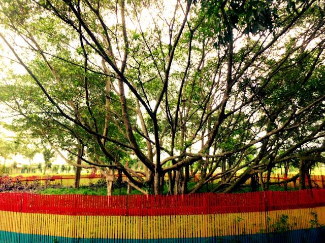 Pohon cinta palembang