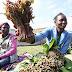 Beeralayda Qaadka ee Dalka Kenya oo ka Cabanayaya in Qaadkooda qiimo aad u hooseeya looga iibsado