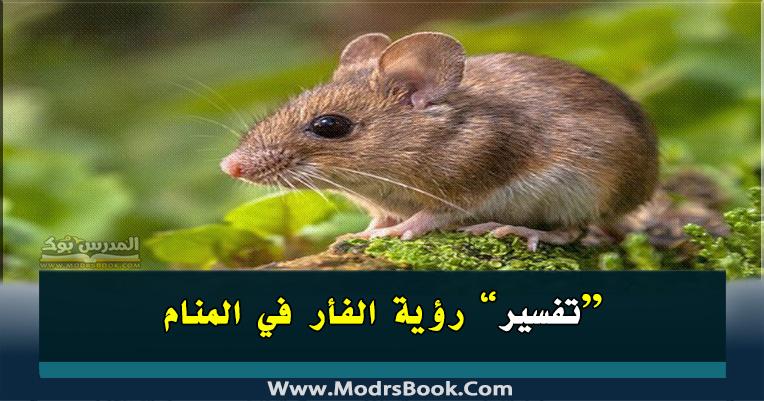 الفأر في المنام للعزباء والمتزوجة والحامل والمطلقة والرجل صغيرة وكبيرة والفأر الأسود