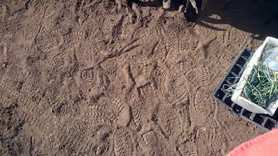 乾燥した畑での足跡