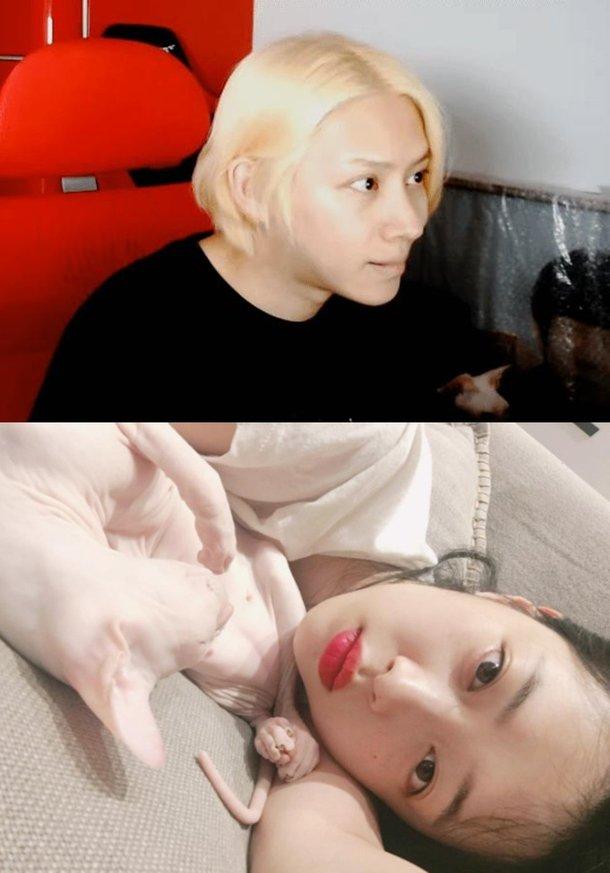 Netizenler Kim Heechul'un Sulli'nin kedisini sahiplendiğini düşünüyor