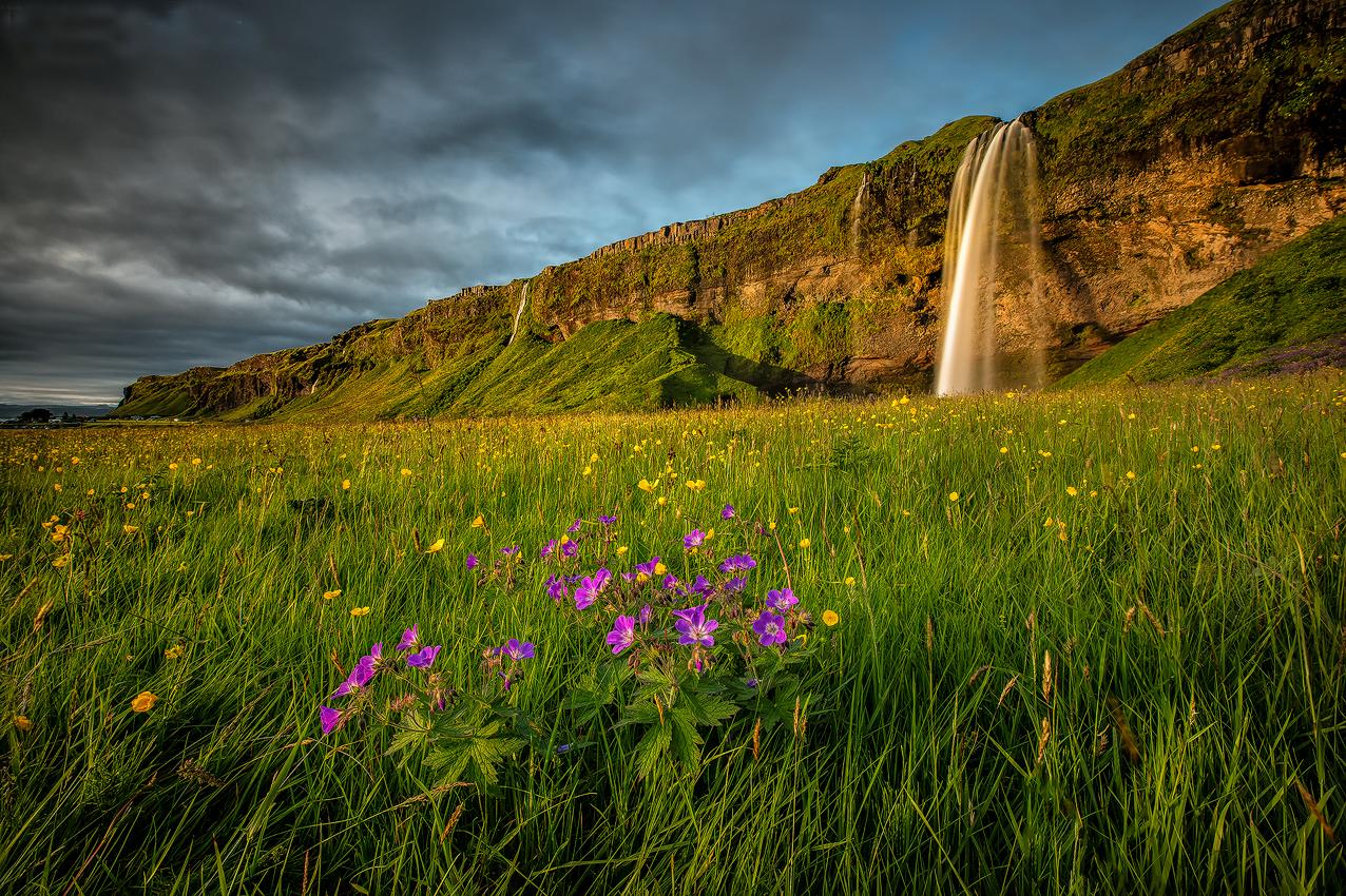 Луг черного пляжа Рейнисфьяра в Исландии