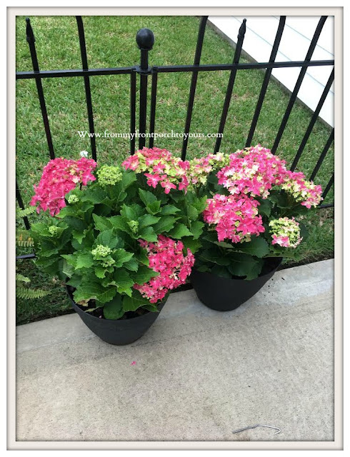 Flower- Bed-Hydrangeas-pink-costco- From My Front Porch To Yours