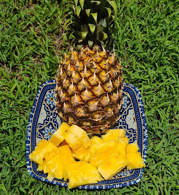 pineapple benefits for skin, benefits of eating pineapple for a woman, pineapple juice benefits for cough, hot pineapple water hoax, pineapple carbs, pineapple and mental health, what does pineapple do to your sperm, is pineapple good for diabetics, pineapple vitamins, disadvantages of pineapple, pineapple juice to reduce high blood pressure, pineapple benefits and side effects, pineapple benefits in pregnancy, pineapple and high blood pressure, pineapple and honey benefits, pineapple traits, pineapple benefits for men, pineapple benefits weight loss, pineapple benefits for skin, pineapple benefits for hair, pineapple benefits and side effects, benefits of pineapple juice, watermelon and pineapple benefits, pineapple benefits for toddlers, organic pineapples, benefits of pineapple for skin, pineappleade, pineapple gut health, is pineapple good for dogs, pineapple for summer, pineapple webmd, pineapple with milk benefits, pineapple peel powder, how much vitamin c in pineapple, advantages and disadvantages of pineapple, benefits of pineapple sexually, is pineapple acidic in stomach, pineapple astringent, what is pineapple good for sexually, is melon good for you,