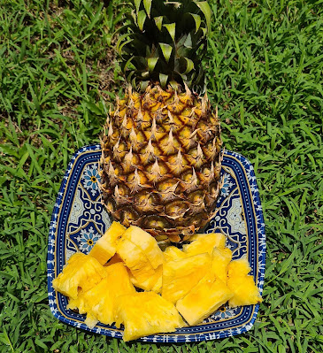 pineapple benefits for skin, malaysia pineapple, benefits of eating pineapple for a woman, pineapple juice benefits for cough, hot pineapple water hoax, pineapple carbs, pineapple and mental health, what does pineapple do to your sperm, is pineapple good for diabetics, pineapple vitamins, disadvantages of pineapple, pineapple juice to reduce high blood pressure, pineapple benefits and side effects, pineapple benefits in pregnancy, pineapple and high blood pressure, pineapple and honey benefits, pineapple traits, pineapple benefits for men, pineapple benefits weight loss, pineapple benefits for skin, pineapple benefits for hair, pineapple benefits and side effects, benefits of pineapple juice, watermelon and pineapple benefits, pineapple benefits for toddlers, organic pineapples, benefits of pineapple for skin, pineappleade, pineapple gut health, is pineapple good for dogs, pineapple for summer, pineapple webmd, pineapple with milk benefits, pineapple peel powder, how much vitamin c in pineapple, advantages and disadvantages of pineapple, benefits of pineapple sexually, is pineapple acidic in stomach, pineapple astringent, what is pineapple good for sexually, is melon good for you,