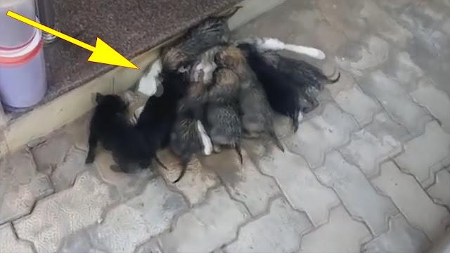Видео: Парень увидел на улице странную копошащуюся кучу