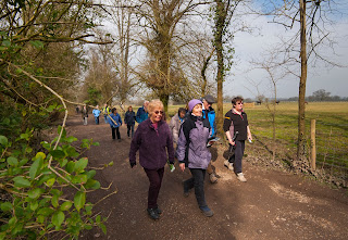 New Forest walking groups