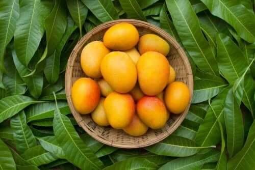 enam-manfaat-kesehatan-daun-mangga