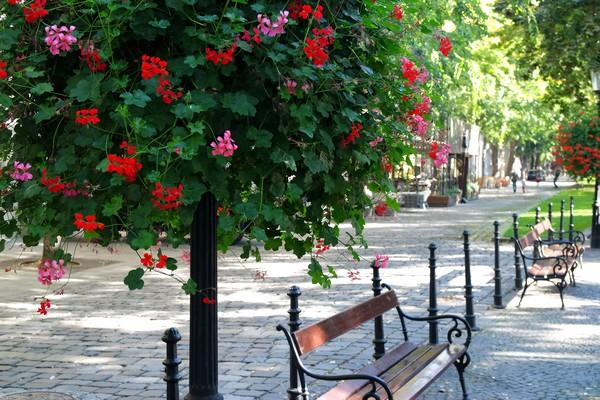 bratislava vieille ville centre hviezdoslavovo námestie