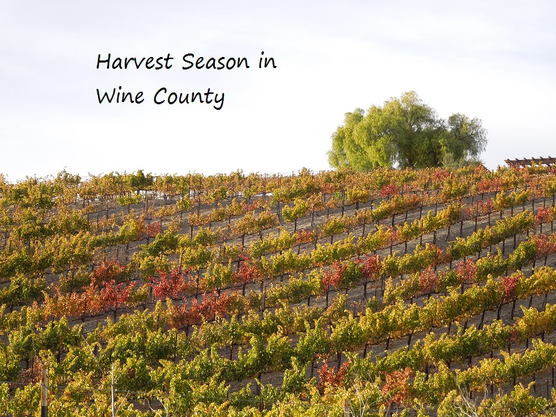Review of Gifts Related to Harvest in California Wine Country